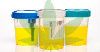 How To Pass a Urine Drug Test