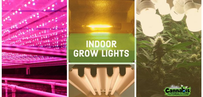 Best Lights For Growing Weed Indoors