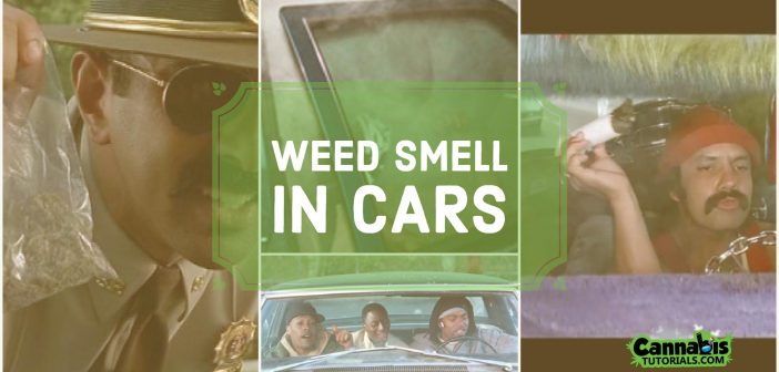 How to Get Weed Smell Out of a Car