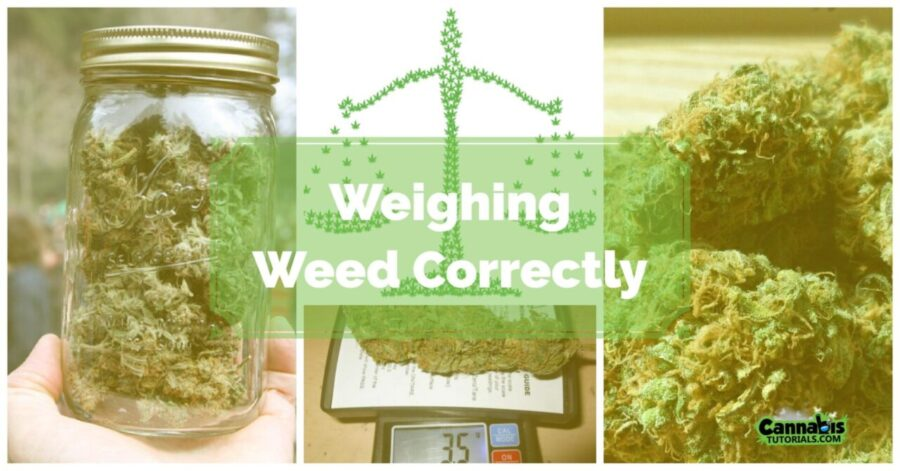 How To Weigh Weed Correctly Cannabistutorialscom